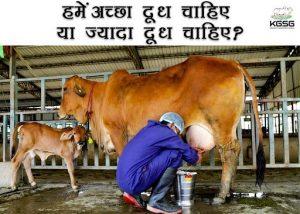 हमें ज्यादा दूध चाहिए या अच्छा दूध चाहिए?   Cow   Milk   Sahiwal Cow  
