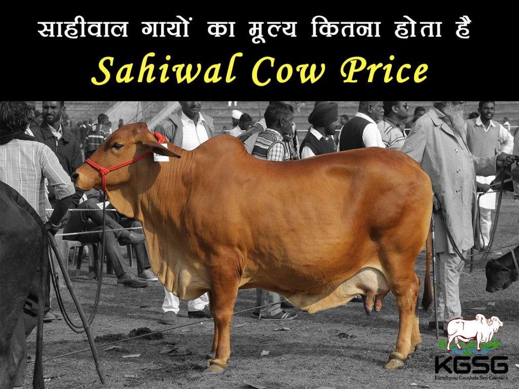 Sahiwal Cow Price