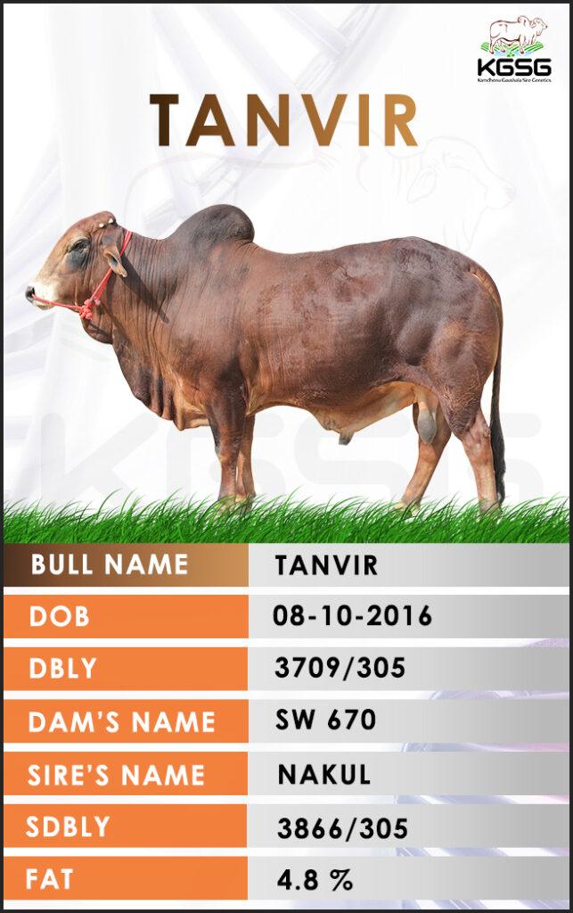 Top Sahiwal Bulls